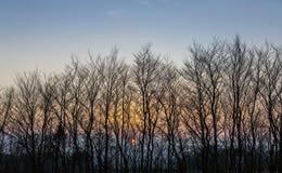 Sun plaçant derrière les arbres silhouettés sur Dartmoor, Devon, R-U photos stock