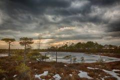 Sun place au printemps le marais photo stock