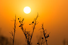 Sun and plant Royalty Free Stock Photo