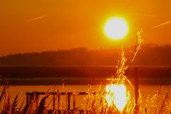 The sun played with reeds at sunset. In February Stock Photo
