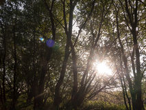 Sun poking through trees inside a forest stunning and lush creat. Ing a powerful scene of nature that is peaceful moving and emotional amazing Stock Images