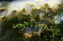 The sun in a pond royalty free stock image