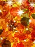 Sun pushing through a varicoloured leaves. EPS 8 Stock Photo