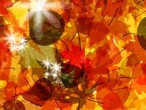 Sun pushing through a varicoloured leaves. EPS 8 Stock Photos