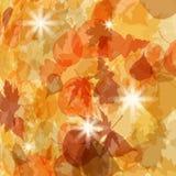 Sun pushing through a varicoloured leaves. EPS 8 Stock Photography