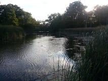 Sun que ajusta-se sobre árvores atrás da lagoa bonita em America do Norte imagem de stock