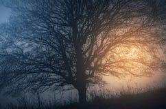 Sun que aumenta sobre o prado com árvore Imagem de Stock Royalty Free
