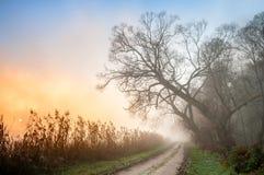 Sun que aumenta sobre uma estrada ao lado de uma floresta na manhã enevoada Fotos de Stock