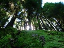 Sun que brilha através da floresta fotografia de stock royalty free
