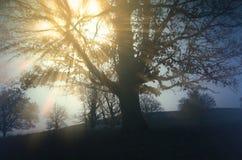 Sun que brilha através da névoa nos ramos da árvore no prado Imagens de Stock