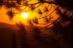 Sun que brilha através das árvores Fotografia de Stock Royalty Free