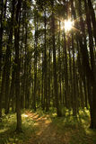 Sun que brilha através das árvores Imagens de Stock