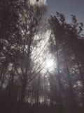 Sun que brilha através das árvores fotografia de stock