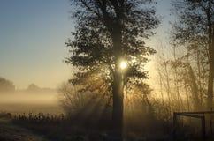 Sun que brilha através das folhas em uma manhã nevoenta Imagens de Stock