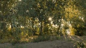 Sun que brilha através dos ramos de árvore no Sandy Beach vídeos de arquivo
