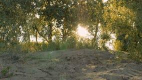 Sun que brilha através dos ramos de árvore no Sandy Beach video estoque
