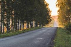 Sun que brilha na extremidade da estrada com a aleia do vidoeiro além dela - Sunny Summer Day, hora dourada, borrada em parte imagens de stock royalty free