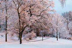 Sun que brilha nas partes superiores da árvore em um parque em um dia de inverno nevado na Suécia de Éstocolmo fotos de stock royalty free