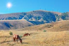 Sun que brilha sobre montes com cavalos Imagens de Stock