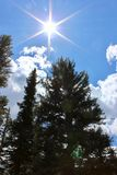 Sun que brilla abajo en árboles de pino Imagenes de archivo