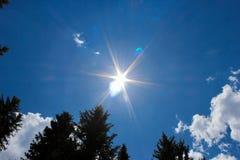 Sun que brilla abajo en árboles de pino Fotografía de archivo