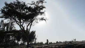 Sun que brilla detrás de árboles metrajes