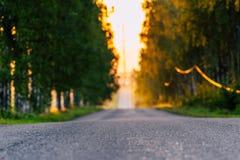 Sun que brilla en el extremo del camino con el callejón del abedul además de él foto de archivo