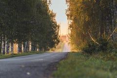Sun que brilla en el extremo del camino con el callejón del abedul además de él - a Sunny Summer Day, hora de oro, borrosa en par foto de archivo