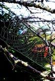 Sun que brilla en la araña, wwb Imágenes de archivo libres de regalías