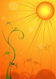 Sun que brilla en la flor Imagen de archivo