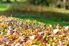 Sun que brilla en las hojas en otoño Foto de archivo libre de regalías