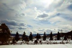Sun que brilla sobre las hileras de árboles y la nieve Fotografía de archivo libre de regalías