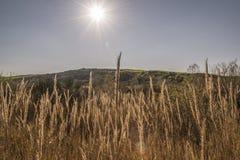 Sun que brilla sobre un campo del trigo secado imagen de archivo