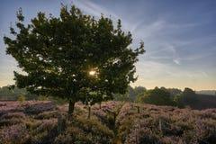 Sun que brilla a través de árbol Fotografía de archivo