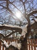 Sun que brilla a través de árbol del invierno Foto de archivo libre de regalías
