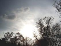 Sun que brilla a través de árboles Fotos de archivo