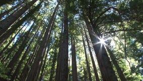 Sun que brilla a través de bosque almacen de video