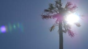 Sun que brilla a través de la palma en Sri Lanka El viento sacude los árboles Los rayos de Sun hacen su manera a través de las ho almacen de video