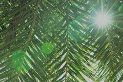 Sun que brilla a través de las hojas de la palmera Imagen de archivo