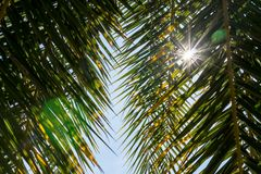 Sun que brilla a través de las hojas de la palmera Fotografía de archivo libre de regalías