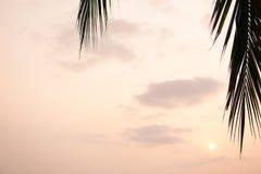 Sun que brilla a través de las hojas de la palmera Debajo de hojas de palma verdes con luz del sol Fotografía de archivo libre de regalías
