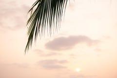 Sun que brilla a través de las hojas de la palmera Debajo de hojas de palma verdes con luz del sol Imagen de archivo