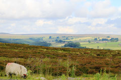 Sun que brilla a través de las nubes en los campos, North Yorkshire Imagen de archivo