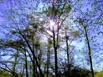 Sun que brilla a través de los árboles Foto de archivo