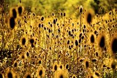 Sun que brilla a través de malas hierbas Imagenes de archivo