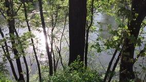 Sun que destella del río que fluye, a través vistos árboles metrajes