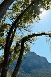 Sun que enarbola a través de los árboles Foto de archivo libre de regalías
