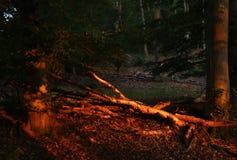 Sun que enciende el bosque rojo imágenes de archivo libres de regalías