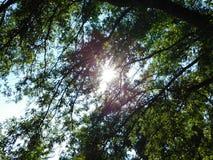 Sun que espreita através dos ramos foto de stock royalty free