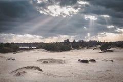Sun que estoura através das nuvens sobre a paisagem desencapada da duna com pinheiros imagens de stock